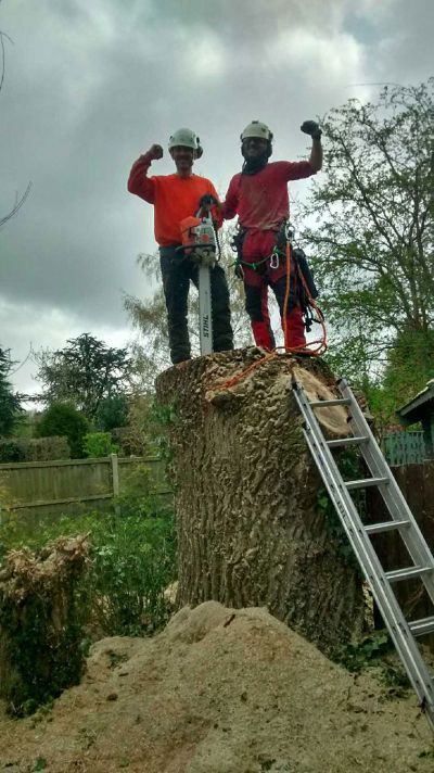 Every staff member at Summers Tree and Garden Services are fully trained and insured, hold qualifications in horticulture and arboriculture