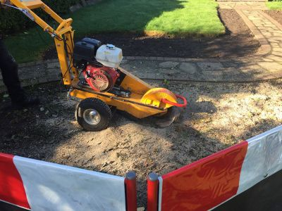 Mechanically grinding out the root plate of felled trees to below ground level or complete stump removal