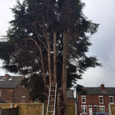 Tree Surgeon to the Rescue!
