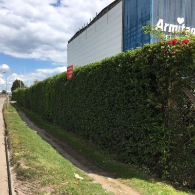 Hedge Cutting for Business Premises