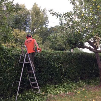 A Spot of Hedge Trimming