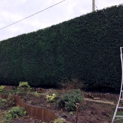 Hedge Cutting - Done Right