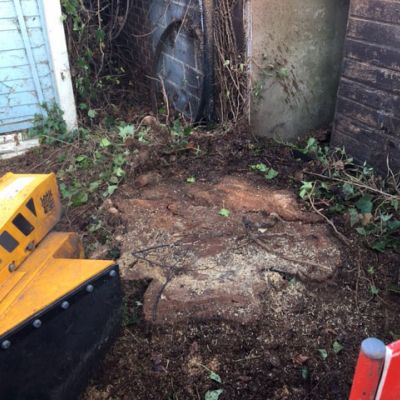 Oak Stump Grinding in Nottingham