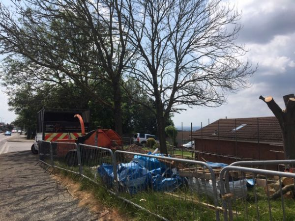 Removal of Dead Ash trees