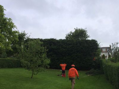 For all your hedge cutting and hedge trimming needs, get in touch with Summers Tree & Garden Services. We are based in Nottingham and serve across Derby and Leicestershire.