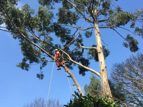 Tree Surgeons Nottingham Stump Grinding Summers Tree
